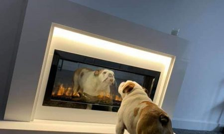 electric fires safe for pets